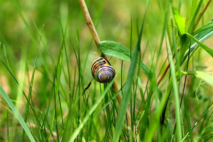 Incredible_Snails_22 (700x466, 83Kb)
