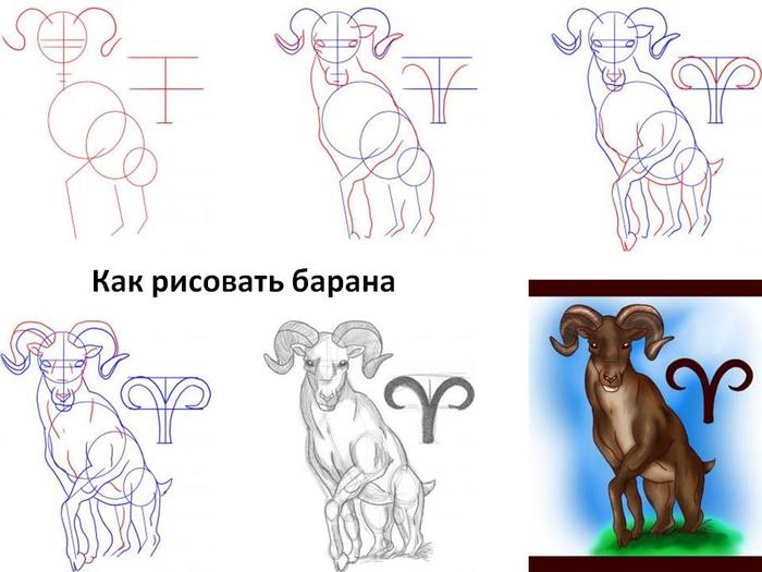kak-risovat-barana (700x525, 256Kb)