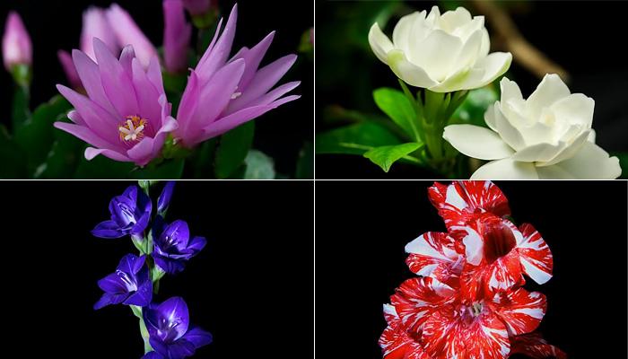 flowers_bloom (700x400, 88Kb)