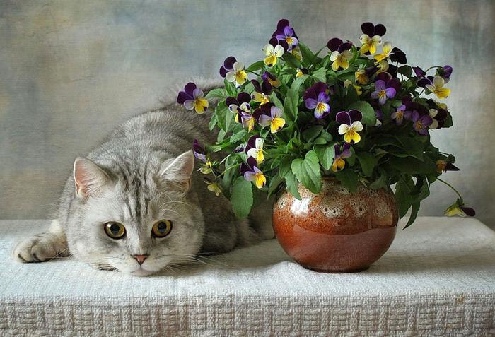 nice_cat_05 (700x477, 148Kb)