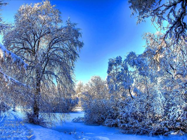 снежная зима 22 (640x480, 609Kb)
