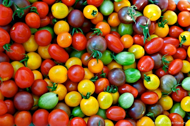 как выращивать помидоры чери, как ухаживать помидорчики черри, как выбрать помидоры черри,