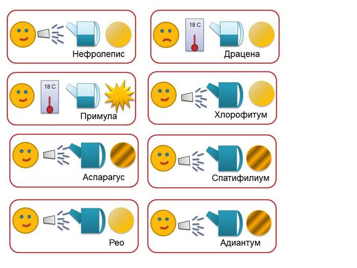 Семена почтой по России Интернетмагазин семян Купить