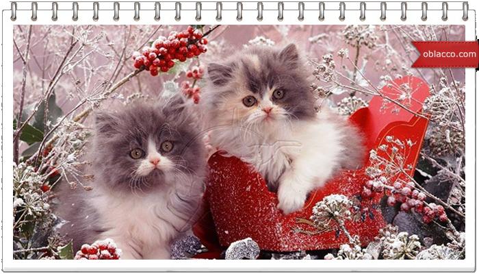 кошки праздники рождество новый год