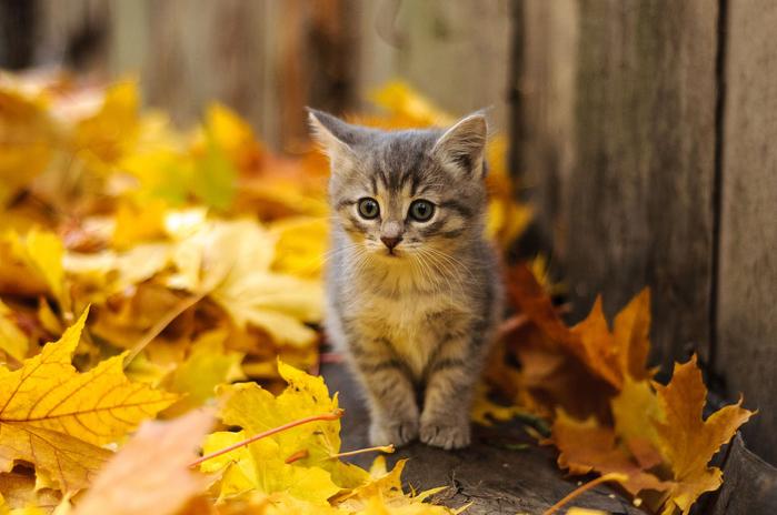 nice_cat_01 (700x464, 338Kb)