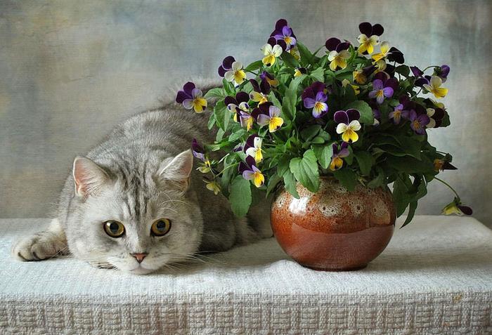 nice_cat_05 (700x477, 390Kb)