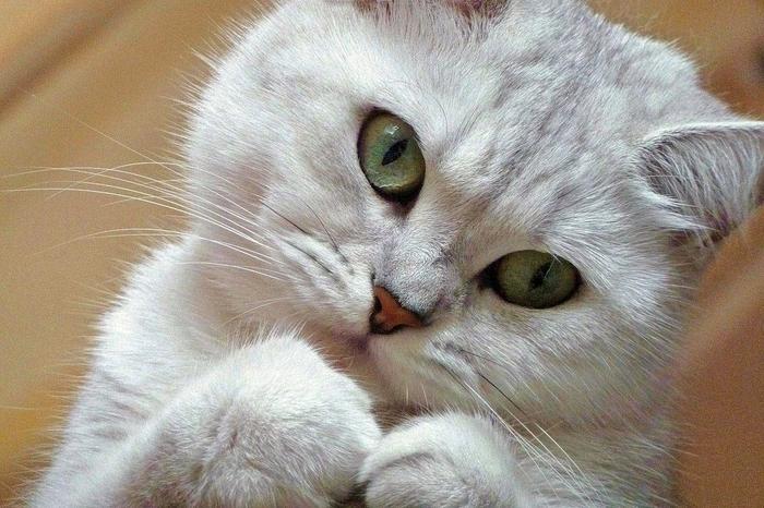 nice_cat_10 (700x466, 377Kb)