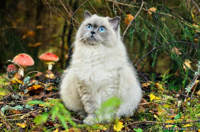 nice_cat_13 (700x463, 540Kb)