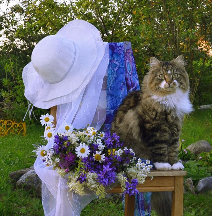 nice_cat_20 (687x700, 636Kb)