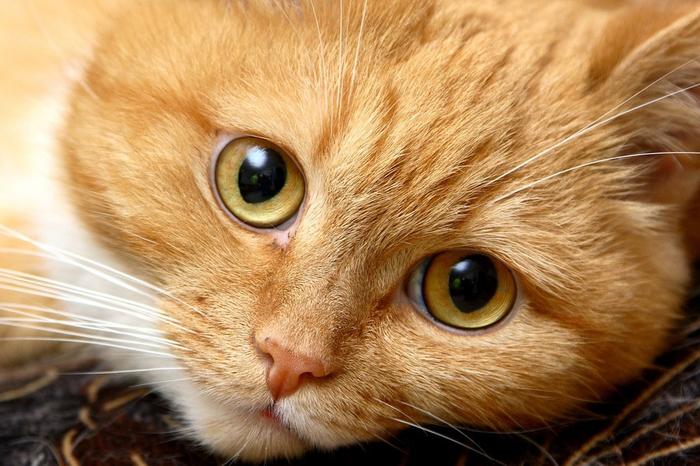 nice_cat_24 (700x466, 405Kb)
