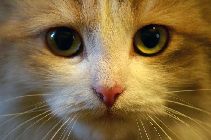 nice_cat_26 (700x466, 397Kb)