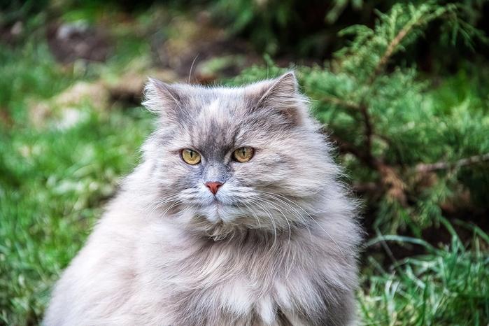 nice_cat_28 (700x466, 344Kb)
