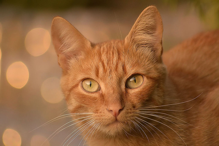 nice_cat_34 (700x466, 310Kb)