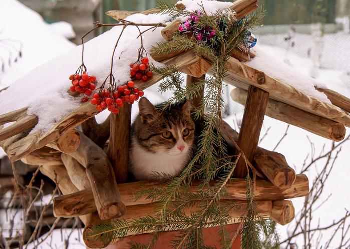 nice_cat_40 (700x497, 472Kb)