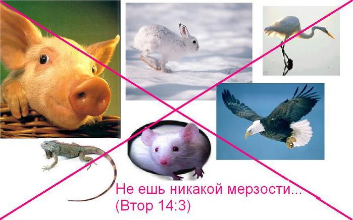ne_eshte_merzosti (700x436, 46Kb)