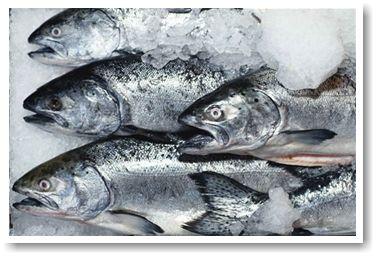 картинка «истина о рыбе»/4387736_2_1_ (376x256, 26Kb)