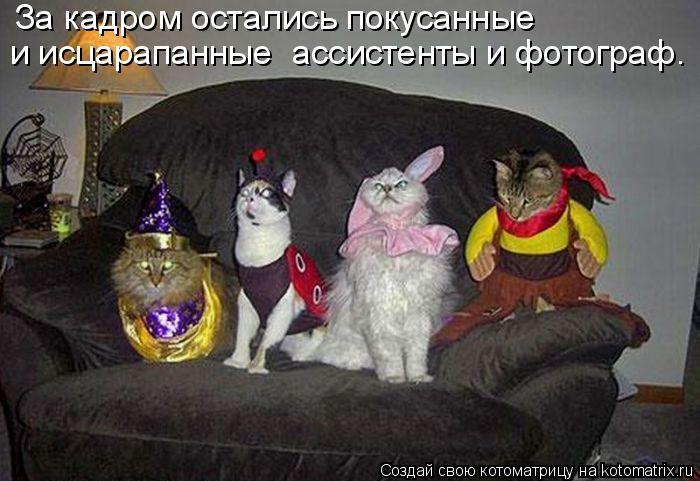 4650338_82809248_kotomatrica_40 (700x481, 60Kb)