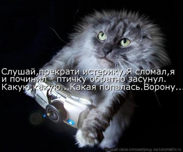 4650338_1343969932_kotomauc (600x500, 60Kb)