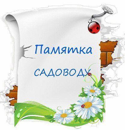 5717539_Vr6dkFB2MUk_2_ (416x430, 32Kb)