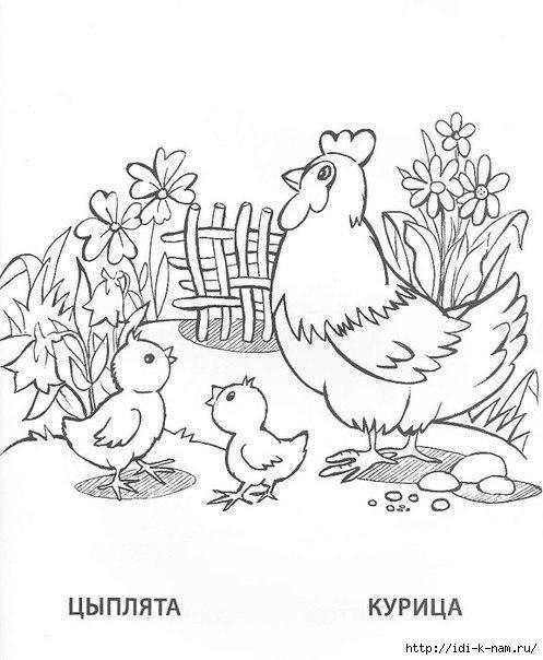 раскраски животныен и их детеныши,