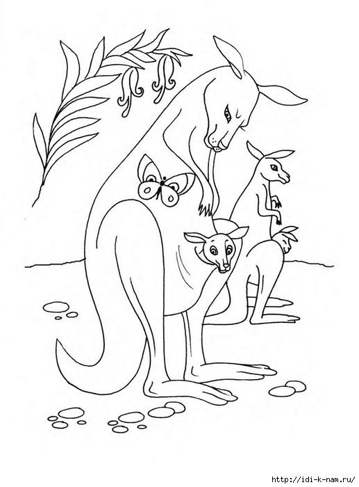 раскраски животныен и их детеныши, раскраска кенгуру и кенгурята,