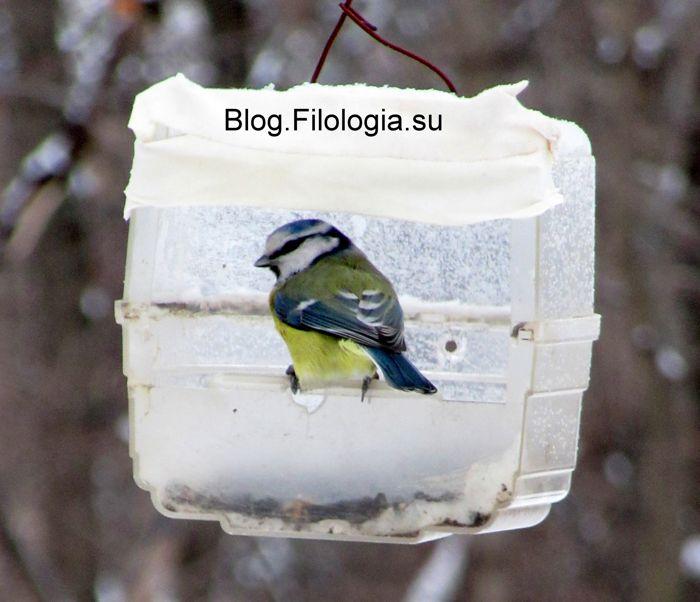 3241858_birds26 (700x602, 51Kb)