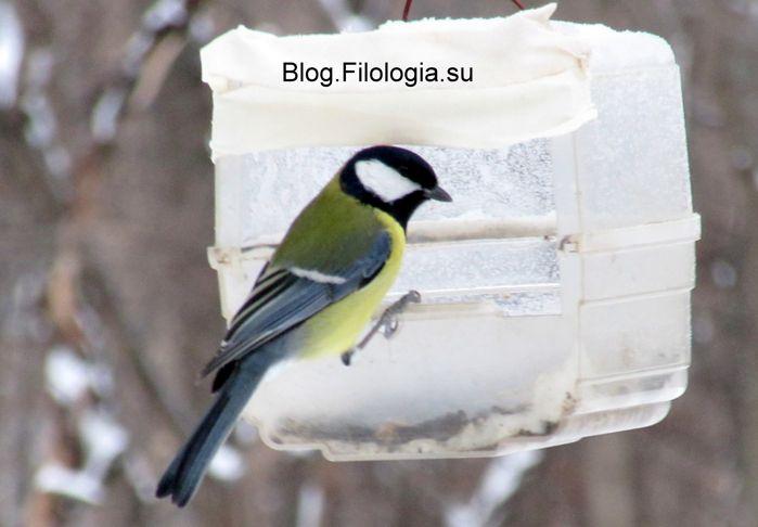 3241858_birds28 (699x486, 37Kb)