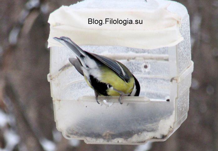 3241858_birds29_2_ (700x484, 40Kb)
