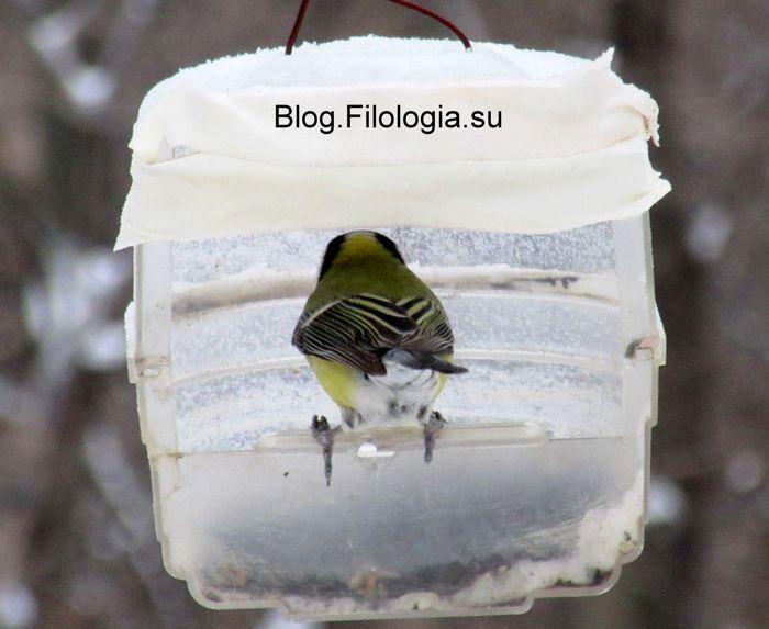 3241858_birds33 (700x573, 46Kb)