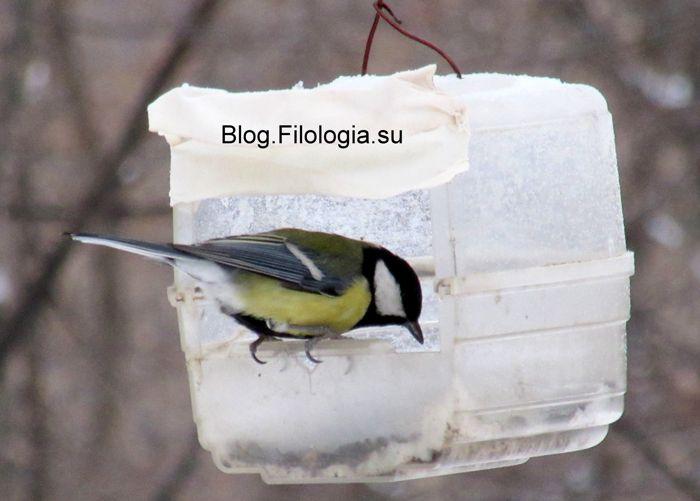 3241858_birds35 (700x501, 39Kb)