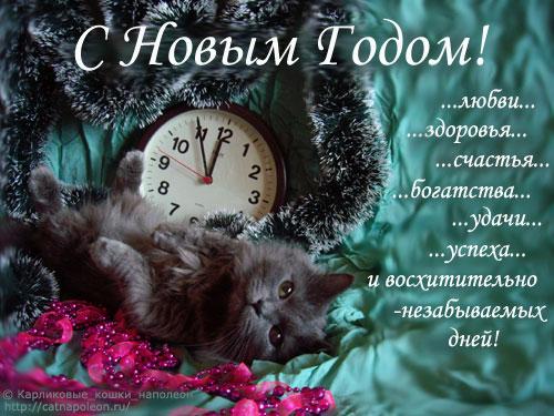 81485450_karlikovuye_koshki_otkruytki_pozhelaniya_novuyy_god_01 (500x375, 66Kb)