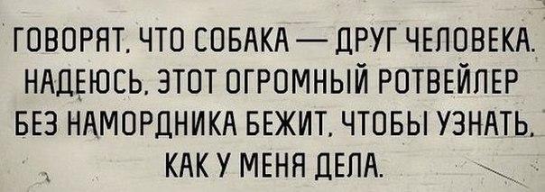 4337340_ZeKIUwOAzPk (604x213, 38Kb)