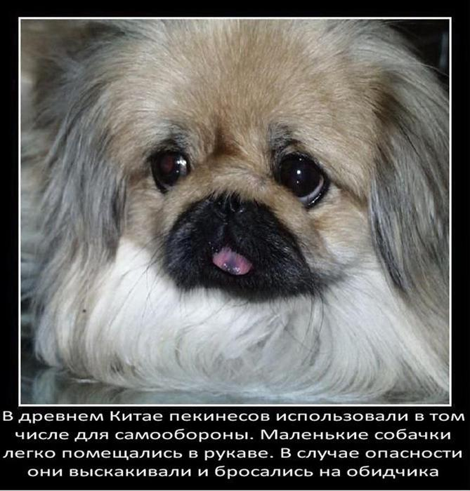 Интересные факты о собаках