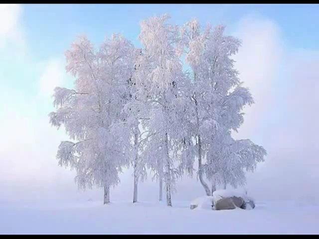 березы зимой 8 (640x480, 136Kb)