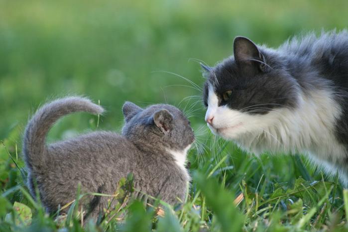cats_19.10.2010_bw_012 (700x466, 129Kb)