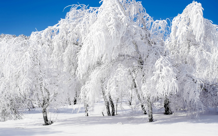 rabstol_net_winter_14 (900x637, 332Kb)