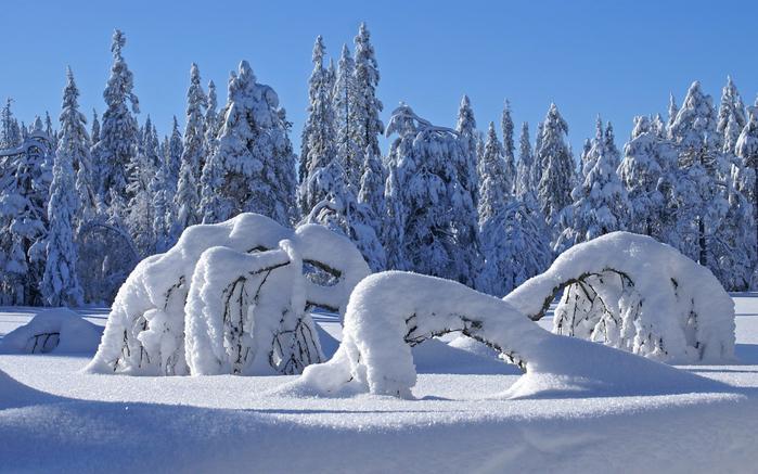 winter_5_1_1920x1200 (900x637, 415Kb)