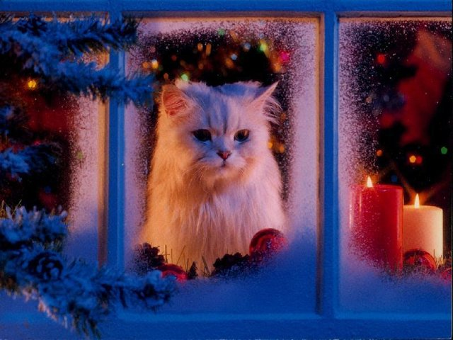 3726595_christmas_preview (640x480, 65Kb)