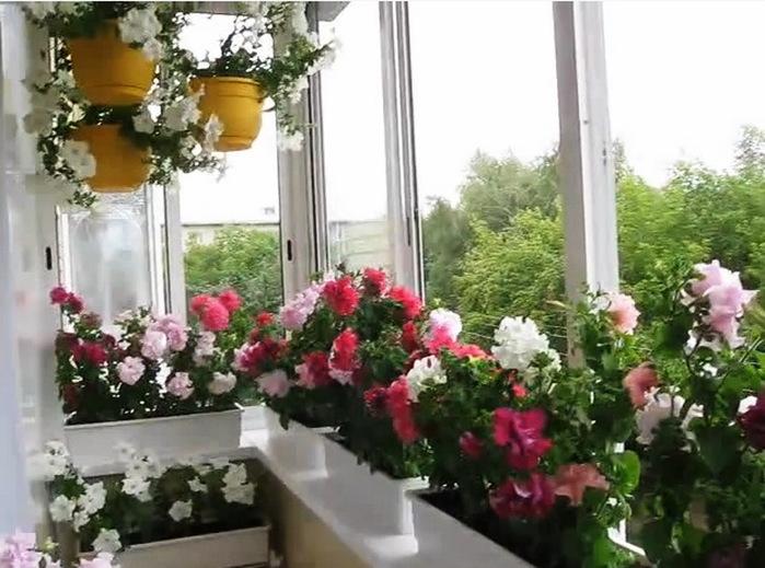 Цветы на балконе - самое интересное в блогах.