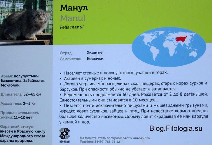 Кот манул: информация в зоопарке (699x479, 57Kb)