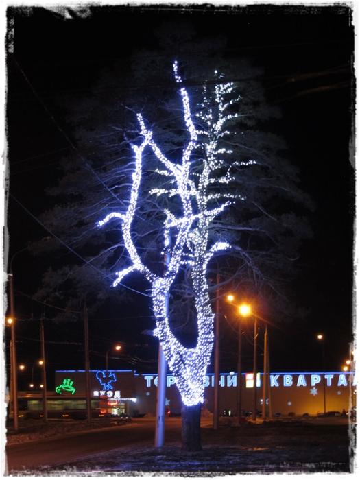 красивое деревоIMG_0488-20141222 (525x700, 337Kb)