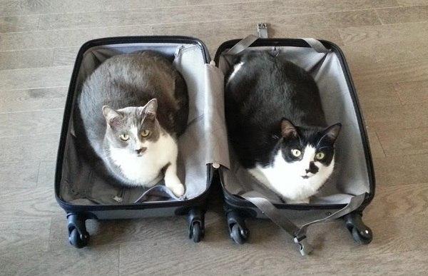 чемодан (600x387, 161Kb)