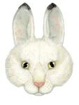 ������ заяц (379x500, 130Kb)