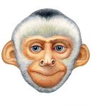 ������ обезьян (400x464, 153Kb)