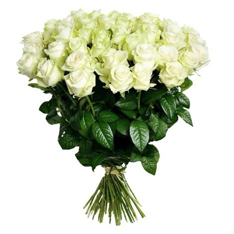 розы (470x470, 99Kb)