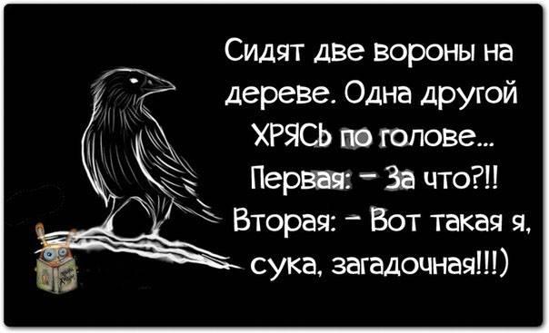 Анекдот Про Ворон