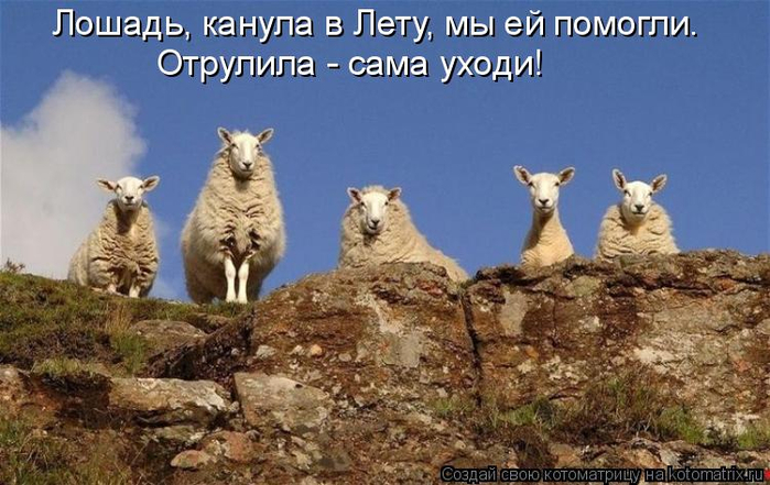 kotomatritsa_dY (700x441, 331Kb)