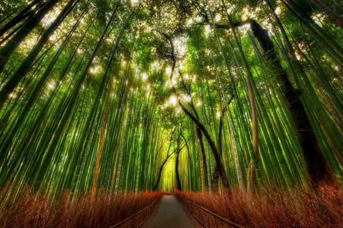 Бамбуковый лес (700x465, 311Kb)