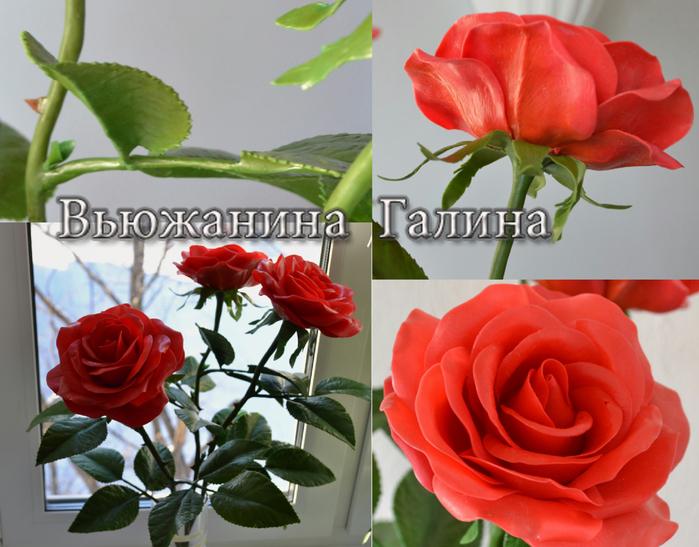 Розы для Жени 3 (700x547, 422Kb)