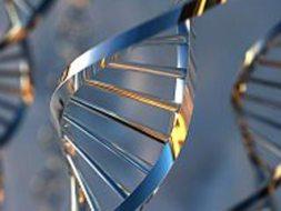human_gene (253x190, 9Kb)